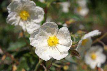 Pflanzen des bibelgartens kirche holtrop for Pflanzen liefern